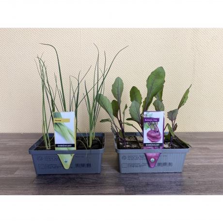 Gemüsejungpflanzen Mix; 6er Set